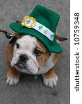 St.Patrick's Day Dog - stock photo
