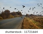 Ravens flock flying over the road. - stock photo