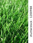 Grass Stems - stock photo