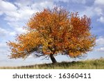 autumn apple-tree on background of blue sky - stock photo
