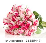 red and white roses - stock photo