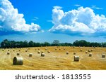 Reaped field and straw rolls - stock photo