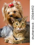 Dog of breed Yorkshire terrier and cat - stock photo