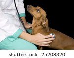 Veterinary inspect the dog - stock photo
