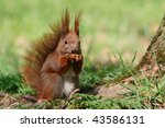 Red squirrel on the grass - stock photo