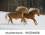 Two horses running through snowy landscape - stock photo