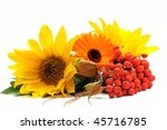 Sunflowers and ashberry - stock photo