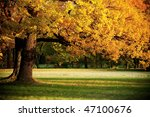 Fall in park - stock photo