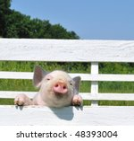 small pig on a grass - stock photo