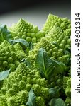 Romanesco broccoli - exotic cauliflower - stock photo