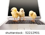 three newborn small chicken and computer on white background - stock photo