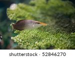 Fish - stock photo