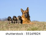 Female German Shepherd dog with three puppies - stock photo