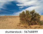 Wild bushe in Bahrain desert - stock photo