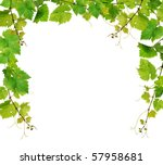 Fresh grapevine border - stock photo
