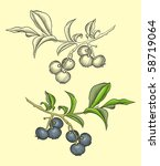 Blueberries in hand drawn, vintage woodcut style. - stock vector