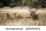 Bevy of royal deer in time of oestrus - stock photo