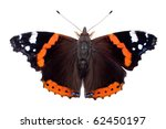 Red Admiral butterfly  isolated on white - stock photo