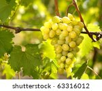 Green grapes on vine - stock photo