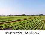 vegetable planting under blue sky - stock photo