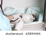 Intensive pet care unit - stock photo
