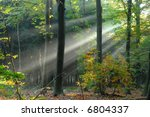 sunbeams pouri into the autumn forest creating a mystical ambiance - stock photo