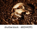 Real human skull figured as tragic scene, color manipulated into dark orange - stock photo