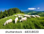 sheep herd, Mala Fatra, Slovakia - stock photo