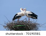 White Stork on nest in spring - stock photo