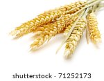 wheat on the white background - stock photo