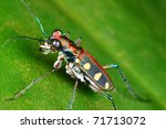 color tiger bug - stock photo
