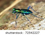 colorful bug - stock photo