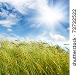 green grass under sky and wind blowing - stock photo