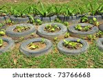 Plants Growing In Old Used Tyres - stock photo