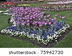 Tulips in London park - stock photo