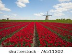 Tulips and windmill - stock photo