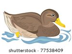 Beautiful duck swimming in pond - stock vector