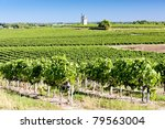 vineyard with windmill near Blaignan, Bordeaux Region, France - stock photo
