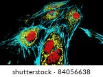 Bovine pulmonary artery epitheliial cells, fluorescent staining and modelling by  surface rendering software. Red - nuclei, blue, microfilaments, yellow - mitochondria. - stock photo