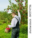 Man working in the apple garden. - stock photo
