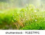 Fresh moss in green nature or in old stone or old wall - stock photo