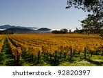 Vineyards in Napa Valley in fall - stock photo
