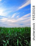 Vertical image of fresh unpicked corn and flowing white clouds - stock photo