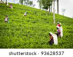 NUWARA ELIYA, SRI LANKA - DECEMBER 8: Unidentified Indian women picks in tea leaves on green hill of tea bushes on December 8, 2011 in Nuwara Eliya, Sri Lanka. - stock photo