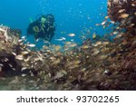 diving the coral reefs of Kenya 5 - stock photo