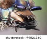 Highly detailed magnified macro of the Jaws of a Tiger Beetle - stock photo