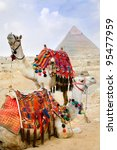 Bedouin camels rest near the Pyramids, Cairo, Egypt - stock photo