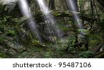 jungle landscape with sunrays - stock photo