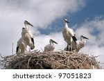 Young storks on the nest. - Ciconia - stock photo