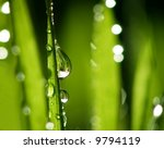 Close-up of fresh green straws with water as a background - stock photo